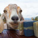goat-bg